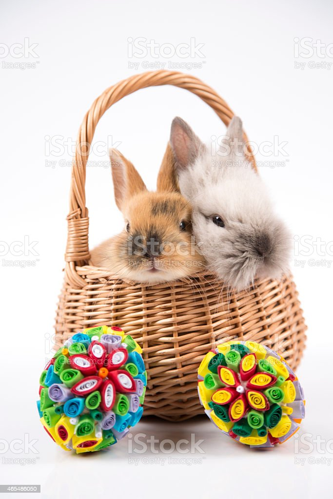 Easter bunny in basket and Easter eggs on white background stock photo