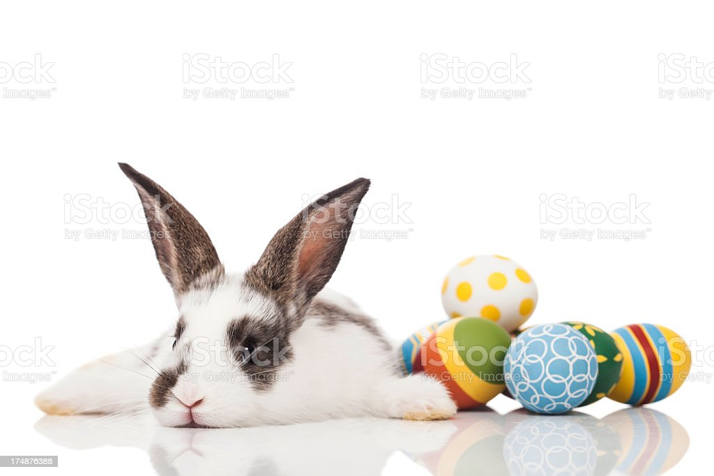 Easter bunny lying down with eggs stock photo
