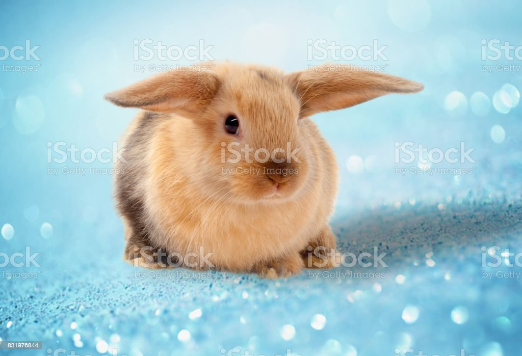 Easter bunny. On a blue background. stock photo