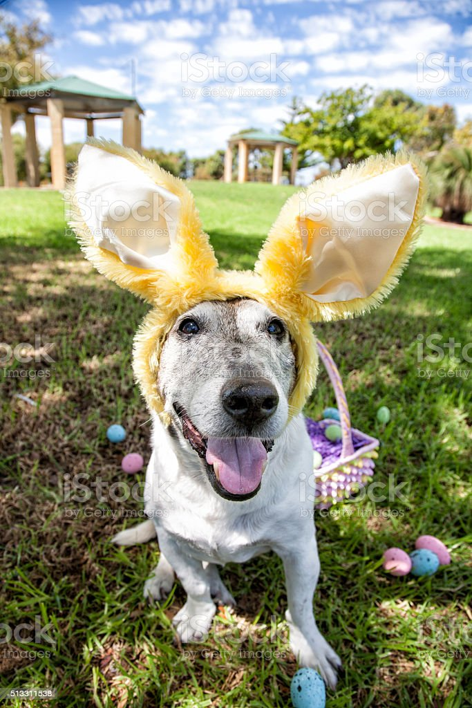 Easter Bunny Park Dog stock photo