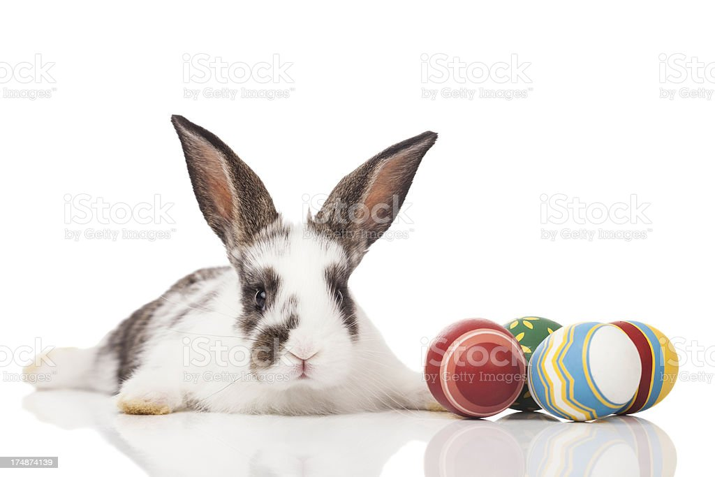 Easter bunny royalty-free stock photo