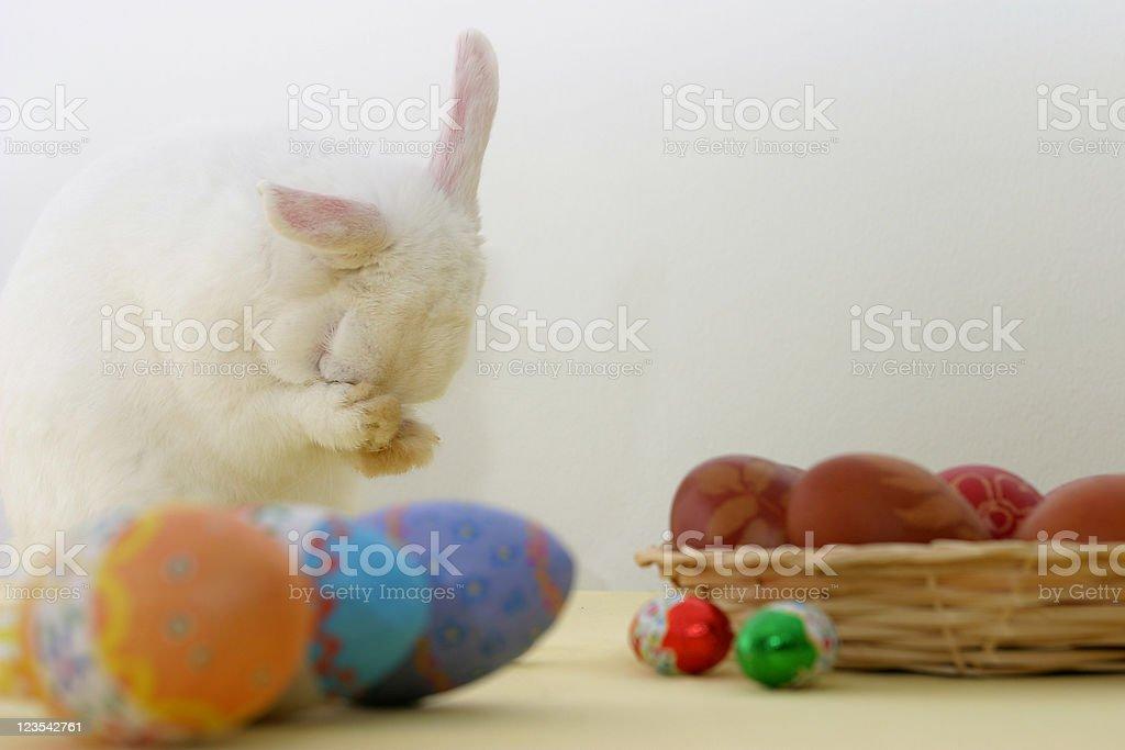 Easter bunny preparing royalty-free stock photo