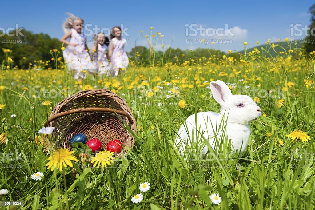 Easter bunny watching the egg hunt stock photo