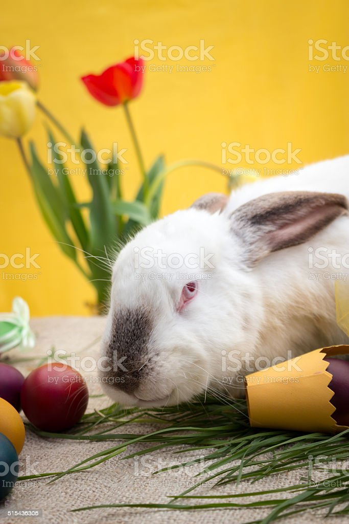 Easter bunny with Easter eggs and yellow basket stock photo