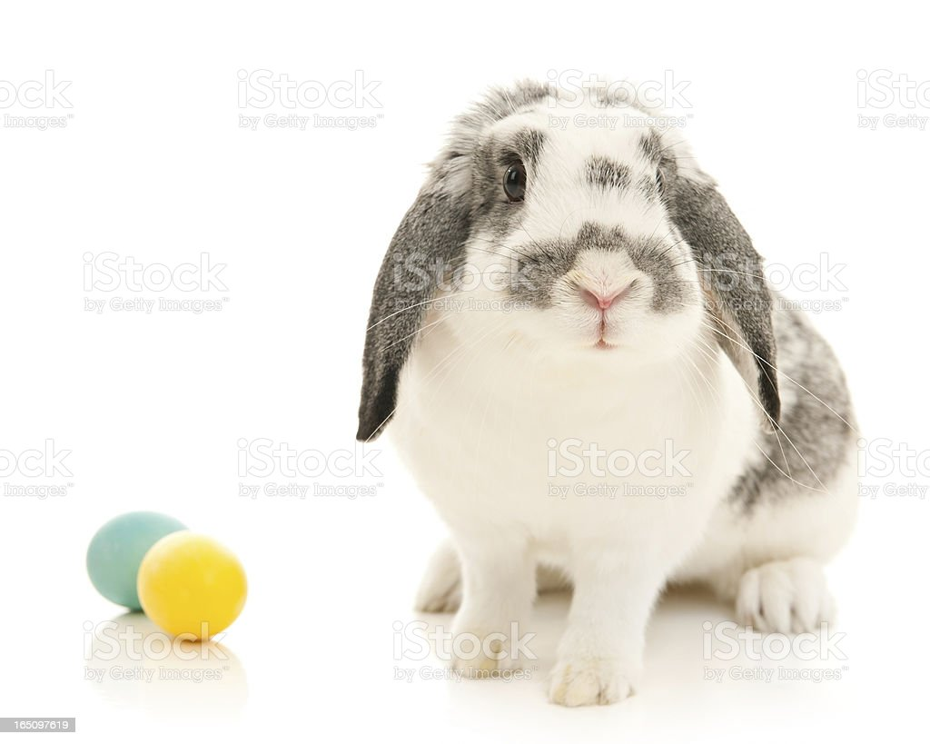 Easter Bunny with Eggs (Isolated) stock photo