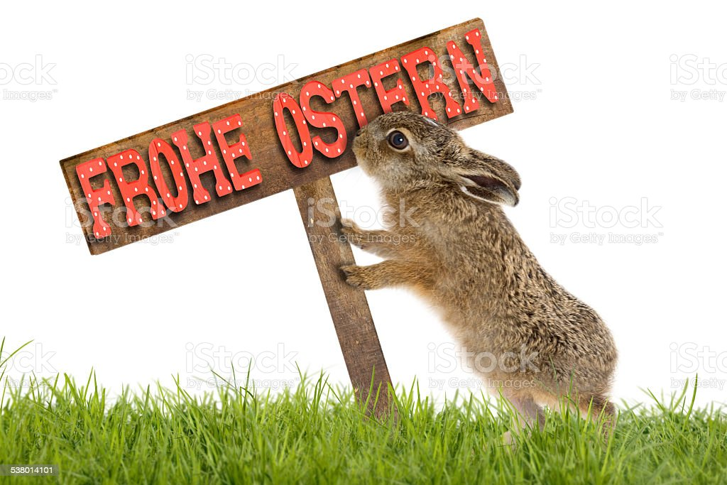 Easter bunny with Wooden shield 'Happy Easter' stock photo