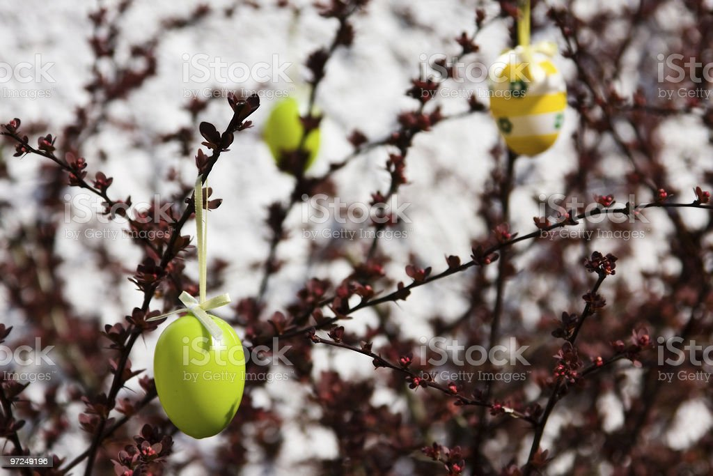 Easter Bush stock photo