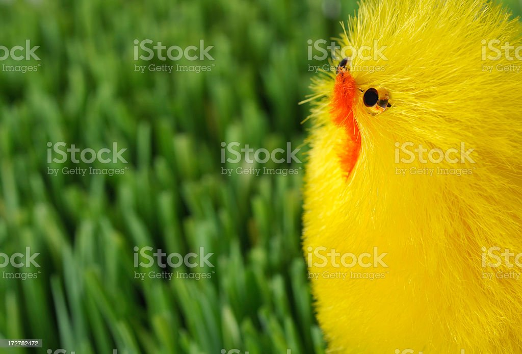 Easter chick and grass royalty-free stock photo