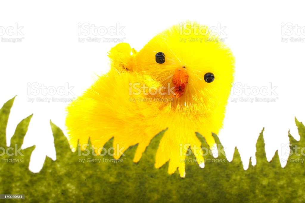 Easter chick isolated on white royalty-free stock photo