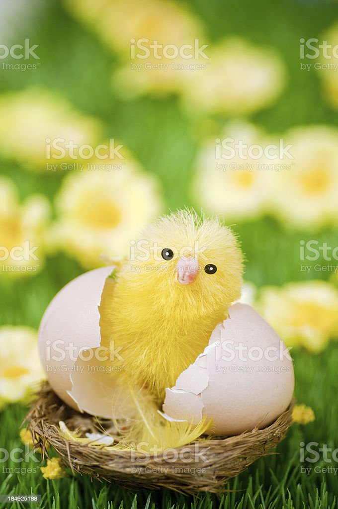 Easter Chick stock photo