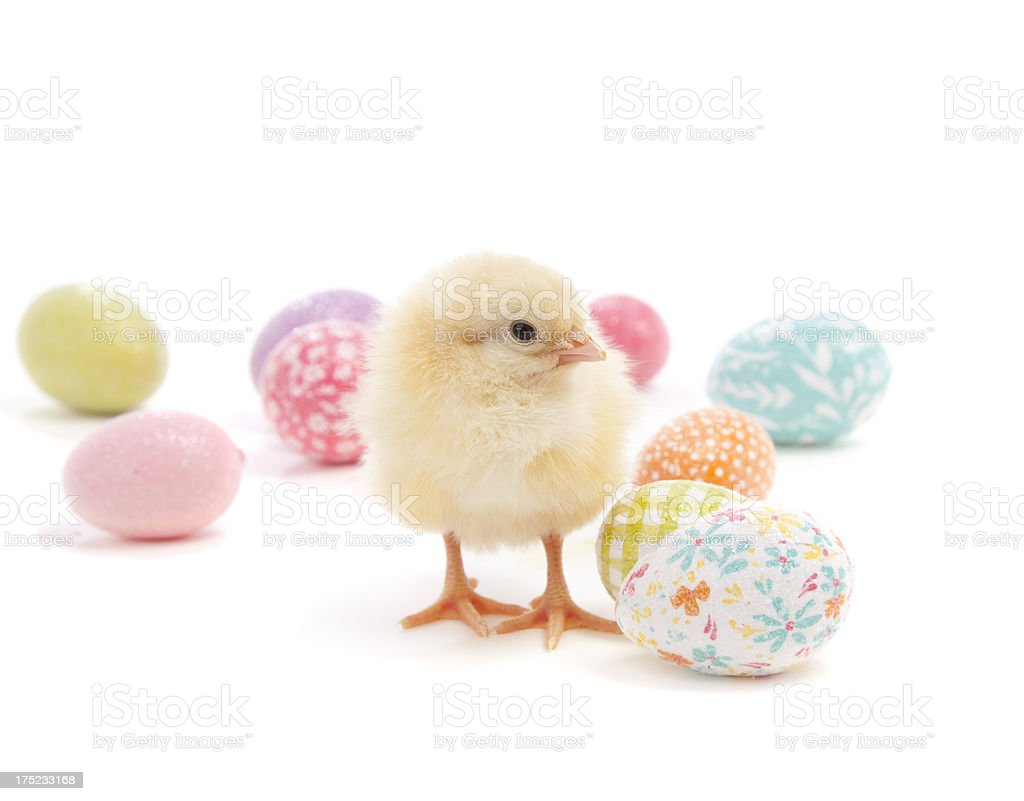 Easter chick surrounded by decorative eggs stock photo