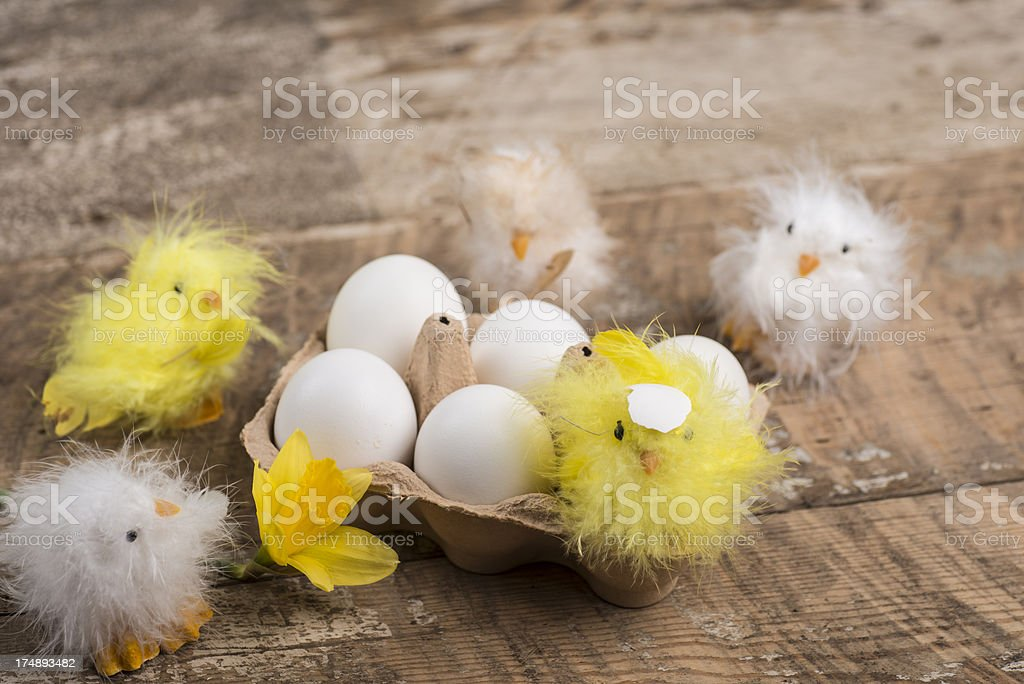 Easter chicken and eggs royalty-free stock photo