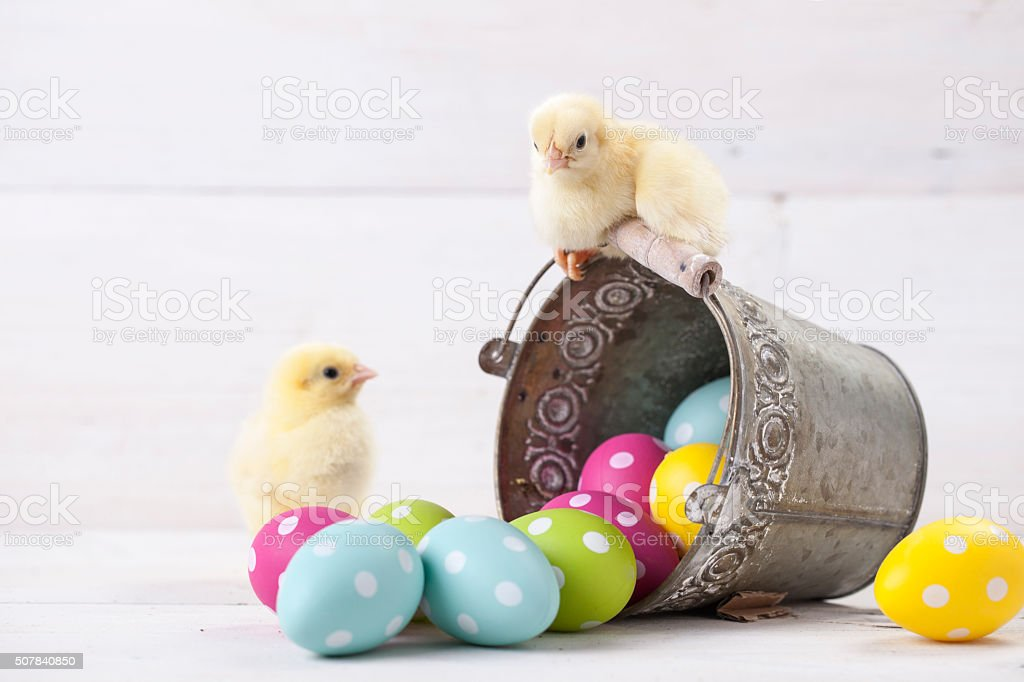 Easter chicken, eggs and decoration on white background stock photo