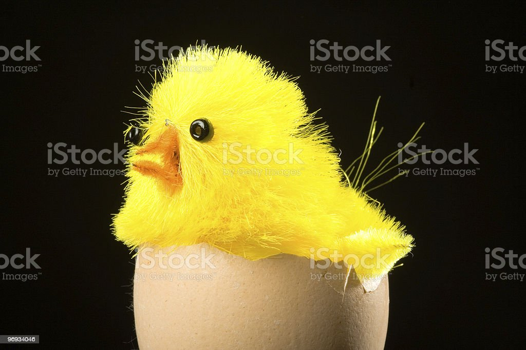 Easter chicken on egg shell royalty-free stock photo