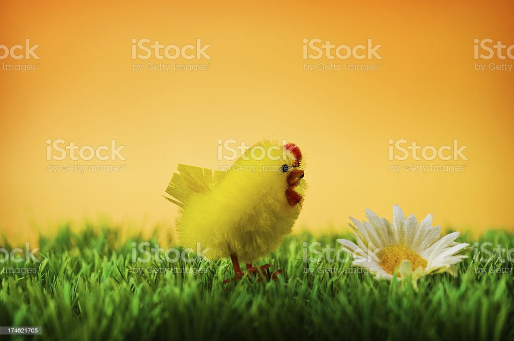 Easter chicken stock photo