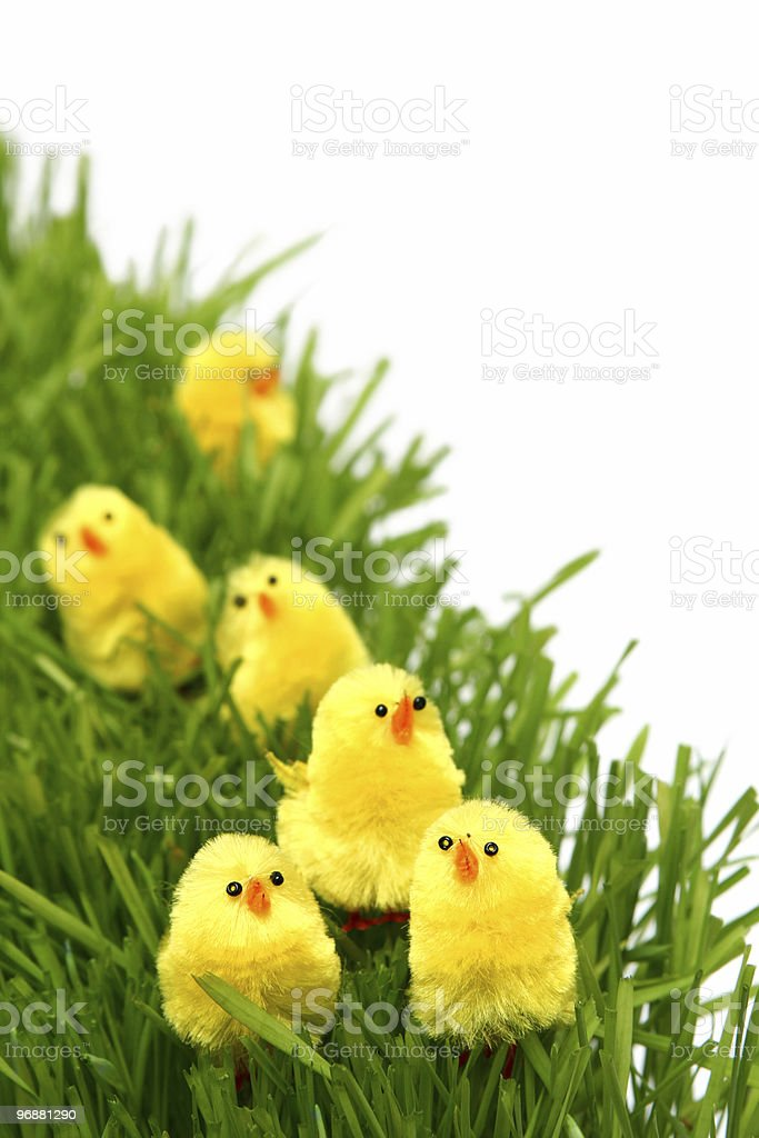 Easter chicken royalty-free stock photo
