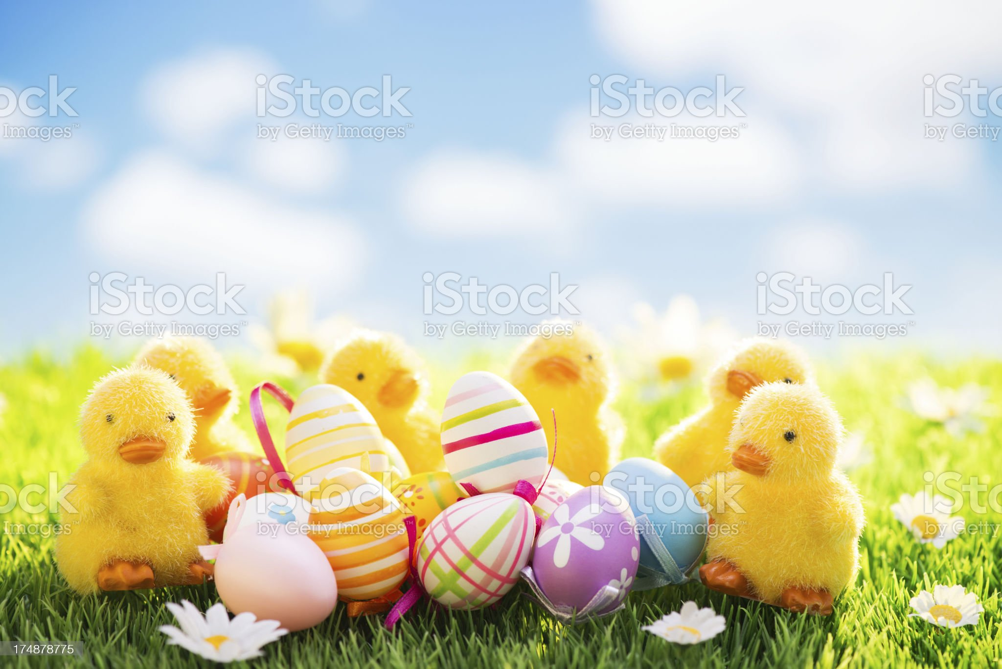 Easter chicks and eggs on meadow royalty-free stock photo