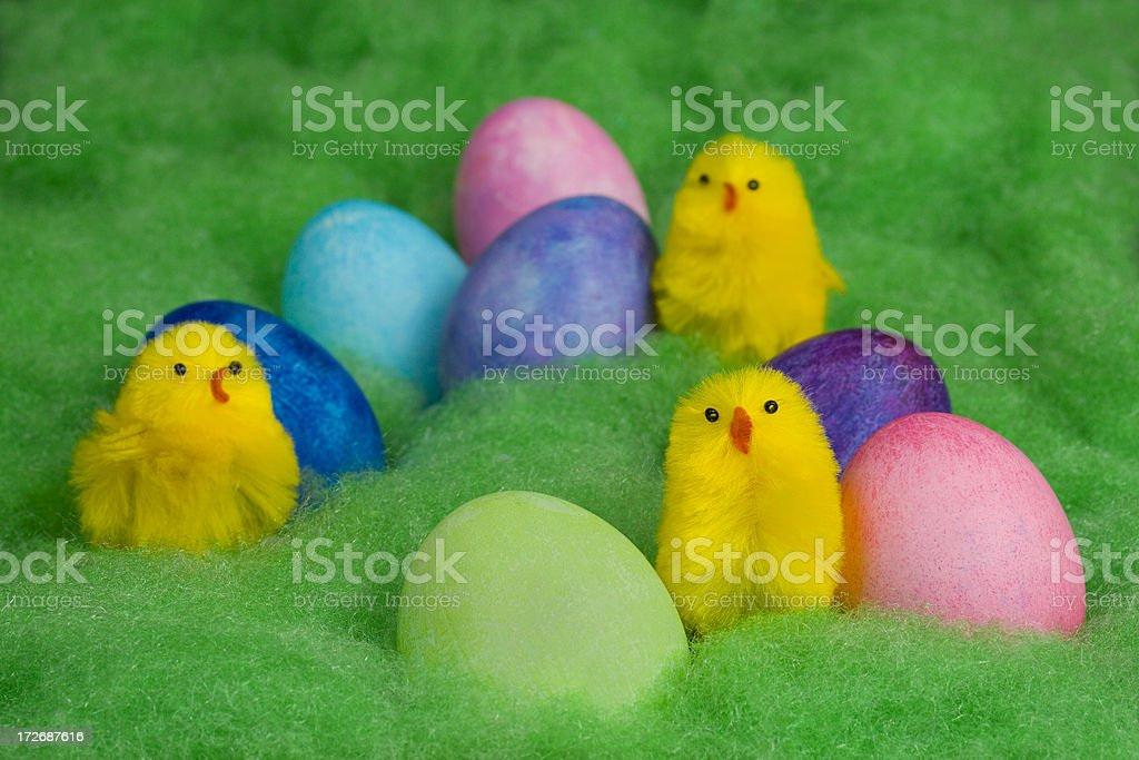 Easter Chicks and Eggs royalty-free stock photo