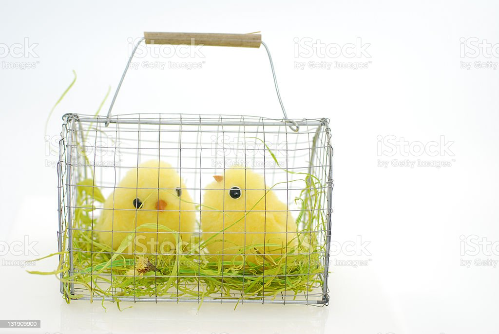 Easter Chicks royalty-free stock photo