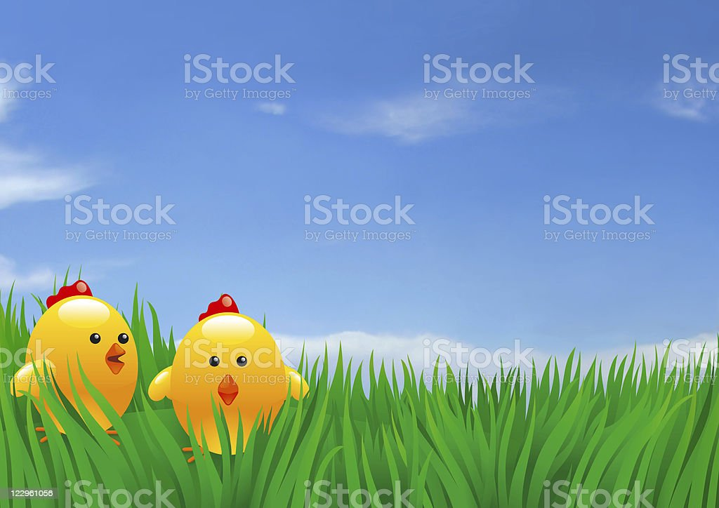 easter chikens stock photo
