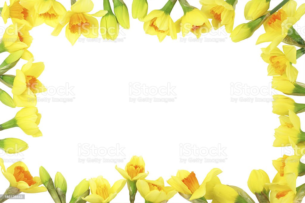 Easter Daffodil Border royalty-free stock photo