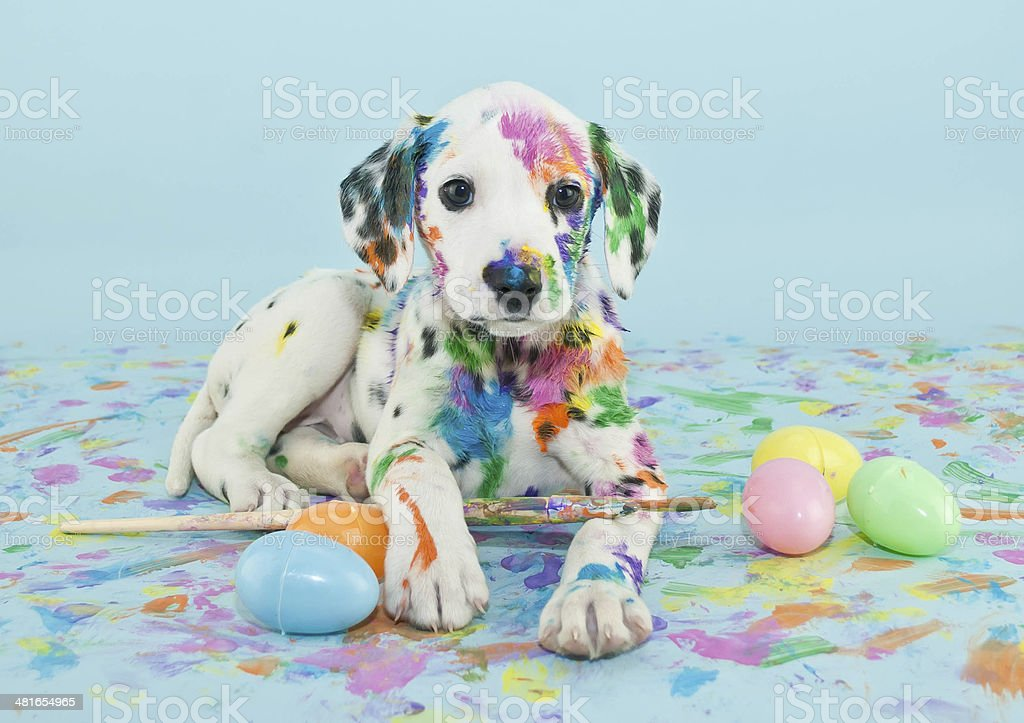 Easter Dalmatain Puppy stock photo