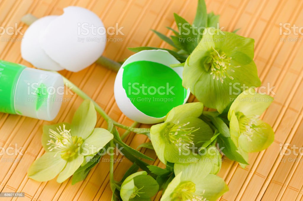 Easter decoration with egg shells green temper paint and hellebore stock photo