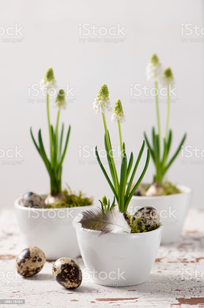 Easter decorations with white pearl hyacinth. stock photo