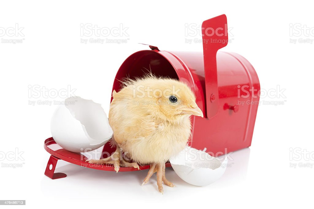 Easter Delivery: Chick coming out of shell and mailbox royalty-free stock photo