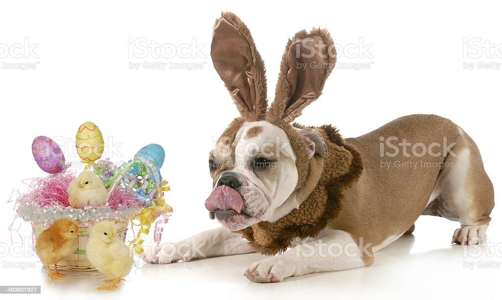 easter dog stock photo