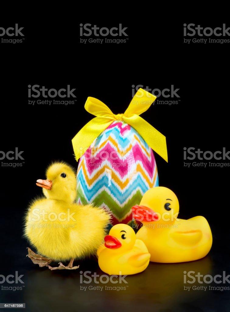 Easter Ducks. stock photo