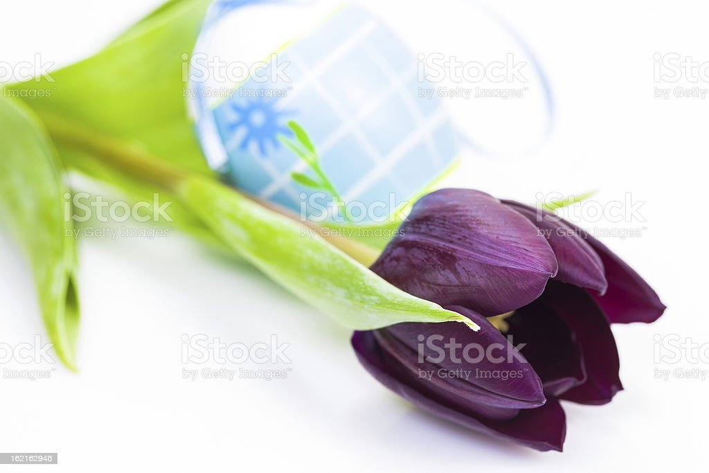 Easter egg and Purple Colored Tulip royalty-free stock photo