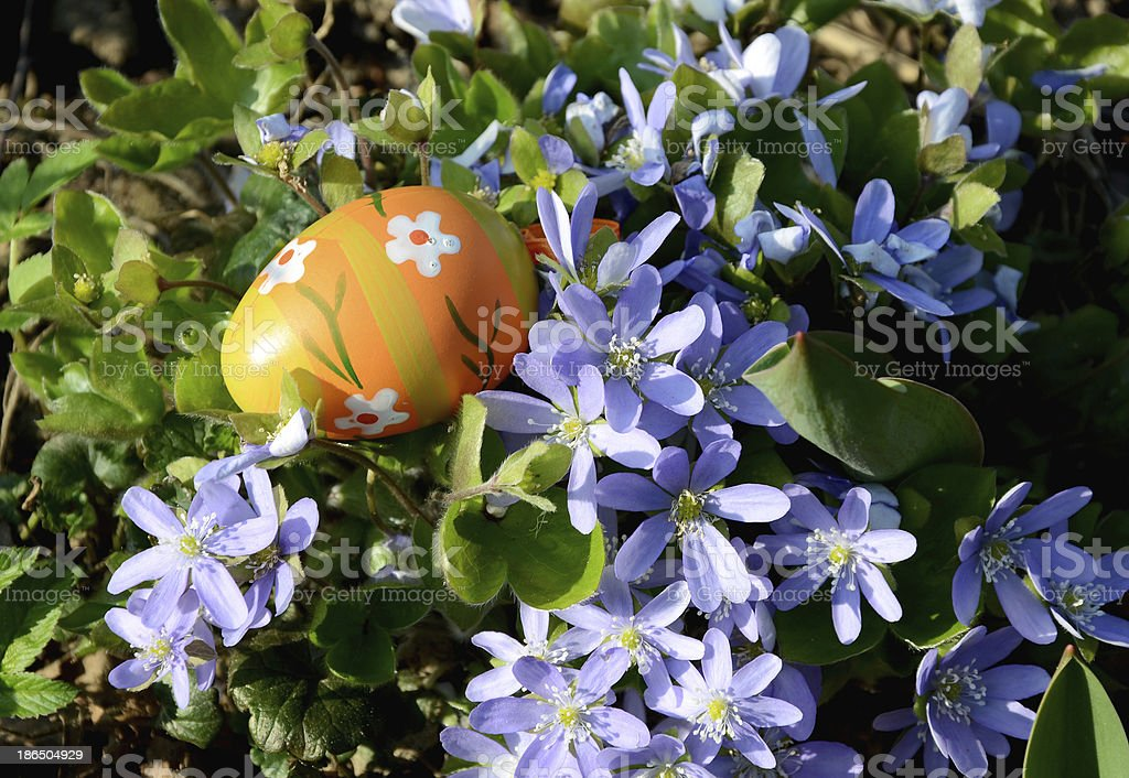 easter egg and violet blossoms stock photo