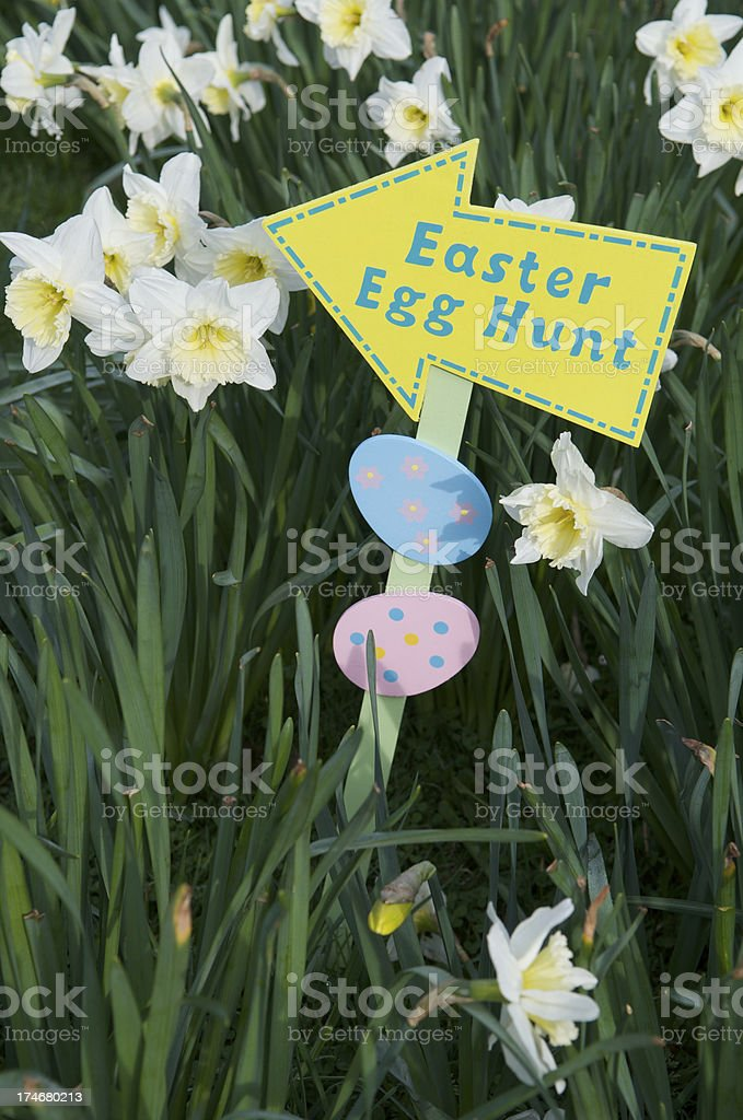 Easter Egg Hunt Sign w Daffodils royalty-free stock photo