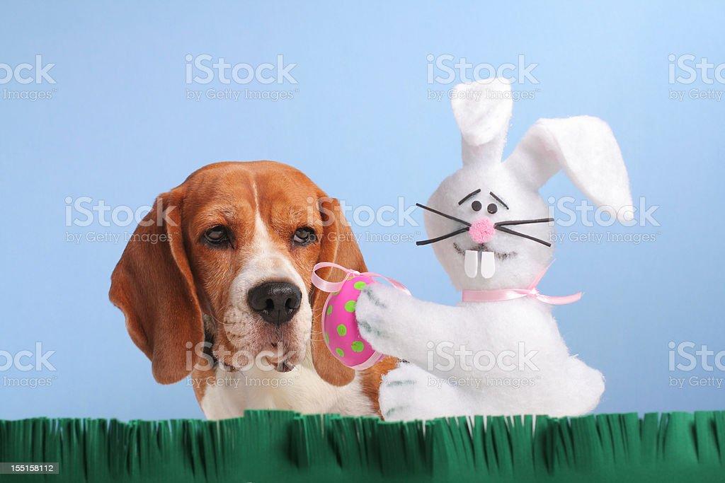 Easter Egg Hunting stock photo