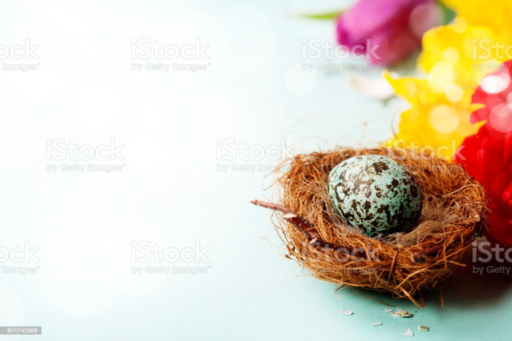 Easter egg in birds nest with spring flowers stock photo