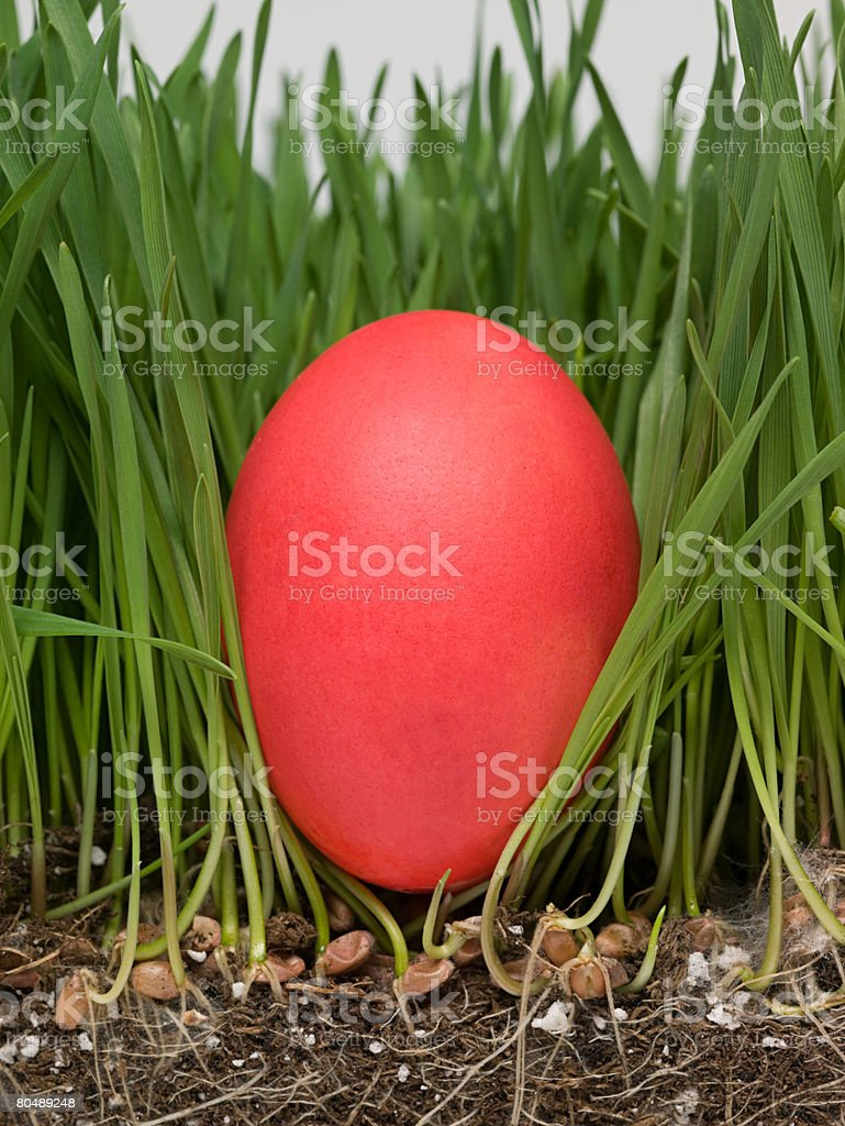 Easter egg in grass royalty-free stock photo