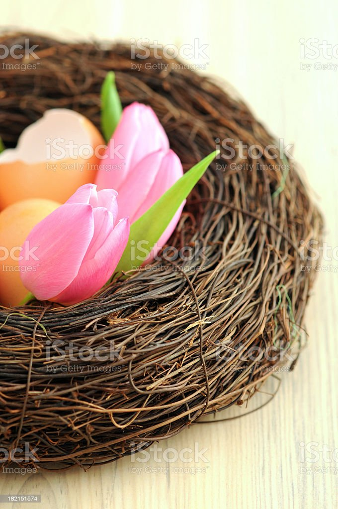Easter egg in host with pink tulip flower heads stock photo