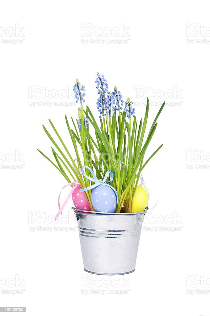 Easter eggs and  blue spring flowers royalty-free stock photo