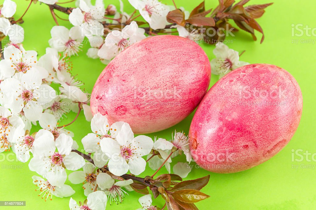 Easter eggs and cherry blossom flowers stock photo