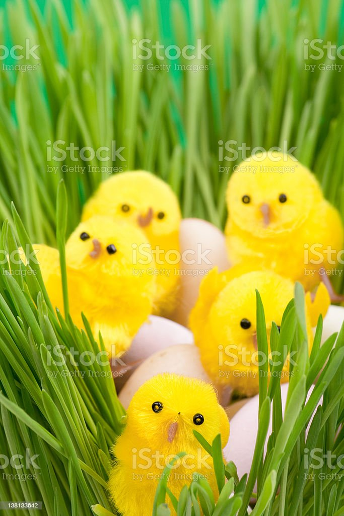 Easter eggs and chicken in grass royalty-free stock photo