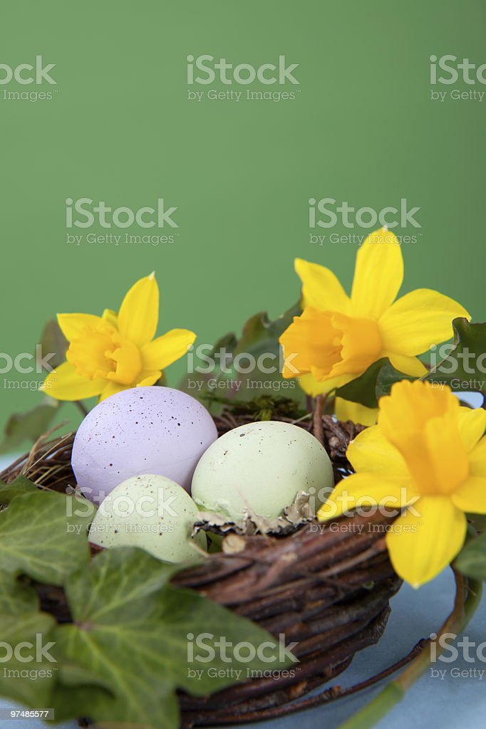 Easter eggs and daffodils royalty-free stock photo