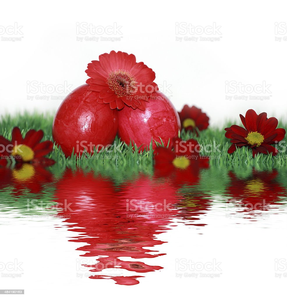 Easter eggs and red flowers stock photo