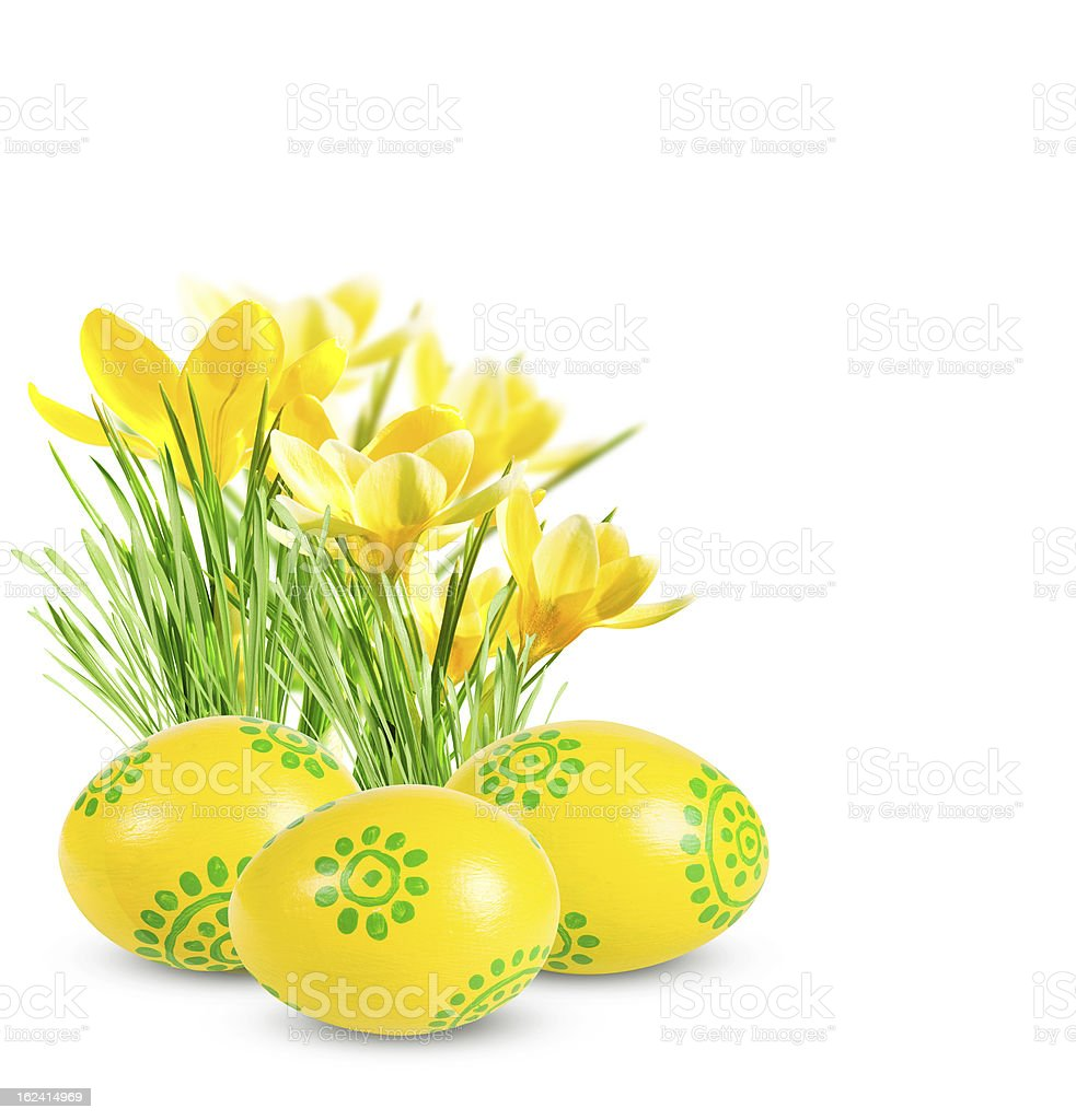 Easter eggs and yellow crocuses royalty-free stock photo