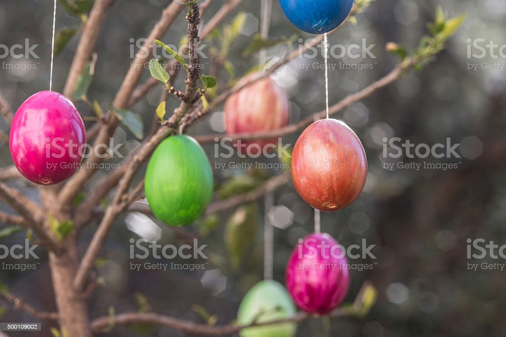 Easter eggs hanging on branches stock photo