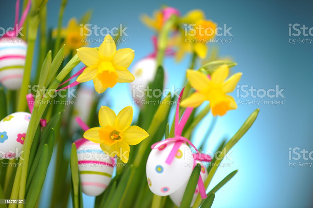 Easter eggs hanging on daffodils royalty-free stock photo