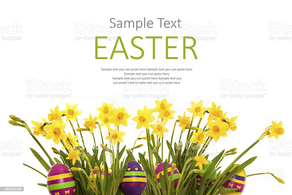 Easter eggs hiding in the grass with daffodil royalty-free stock photo