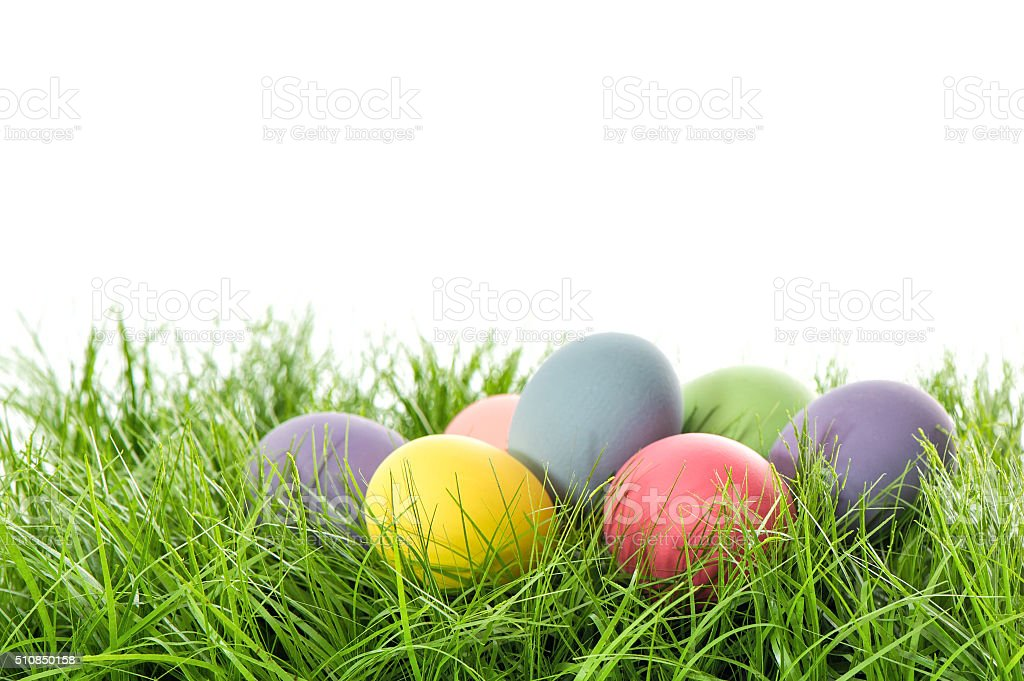 Easter eggs in green grass. Festive decoration stock photo
