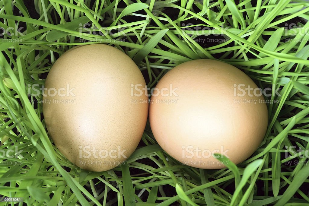 easter eggs in green grass royalty-free stock photo