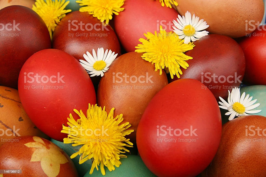 Easter eggs with camomile and dandelion royalty-free stock photo
